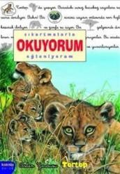 Kaknüs Yayınları - Çıkartmalarla Okuyorum Eğleniyorum - Aslan Yavrusu Tortop